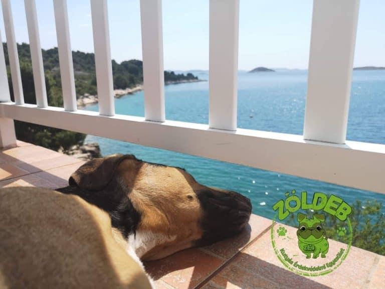 Horvátországba kutyával. - ZöldEb - Ebutazó